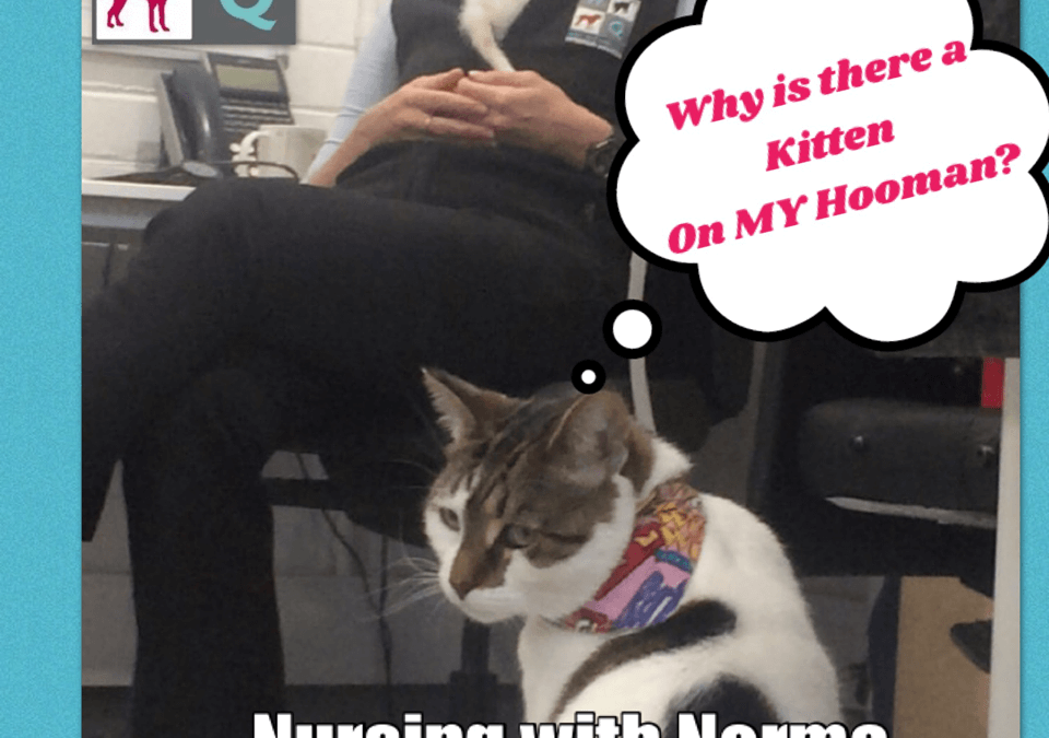 Nursing with Norma February/March 2019